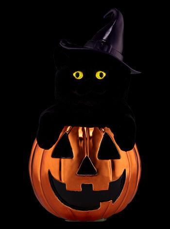 Pumpkin Kitten Nightlight Wallflowers Fragrance Plug