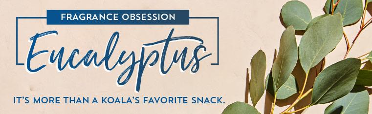Fragrance Obsession: Eucalyptus. It's more than a koala's favorite snack.