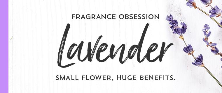 Fragrance obsession. Lavender. Small flower, huge benefits.